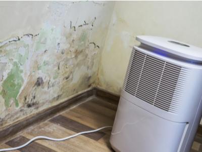Dehumidifier next to mold